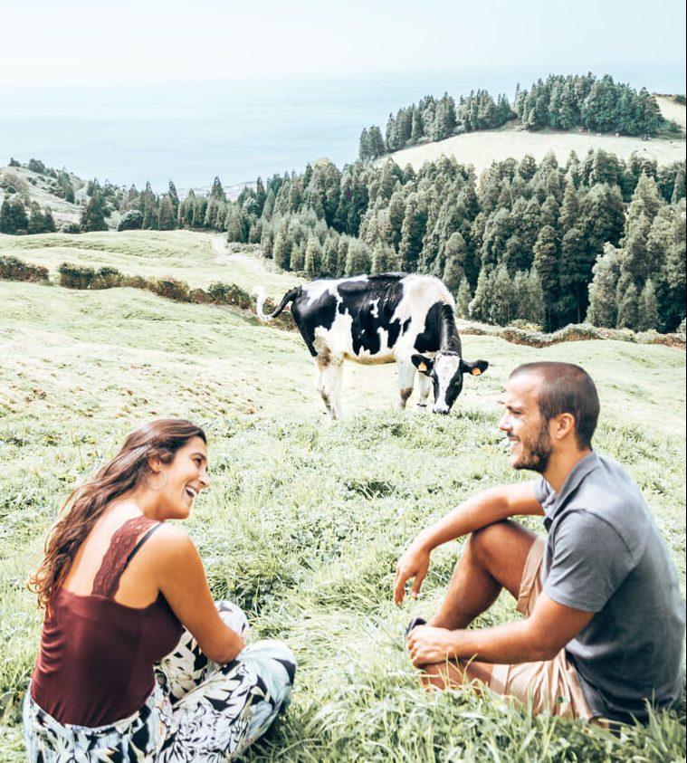 Azores Cow